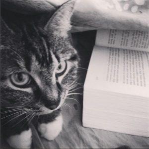 Obstacle majeur à l'écriture au lit : le chat