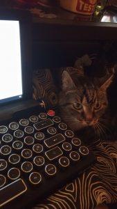 Le chat de l'écrivaine