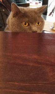 Un petit chat dans un bar