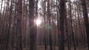 Forêt allemande