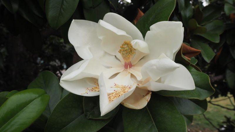 Ecrire un roman botanique et perdre des lecteurs ?