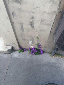Des fleurs dans la ville