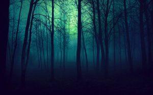 Forêt mystérieuse, nuit